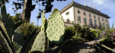Isole di Brissago / ristorante / cactus