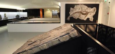 Meride / museo dei fossili