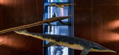 Museo Fossili M. San Giorgio