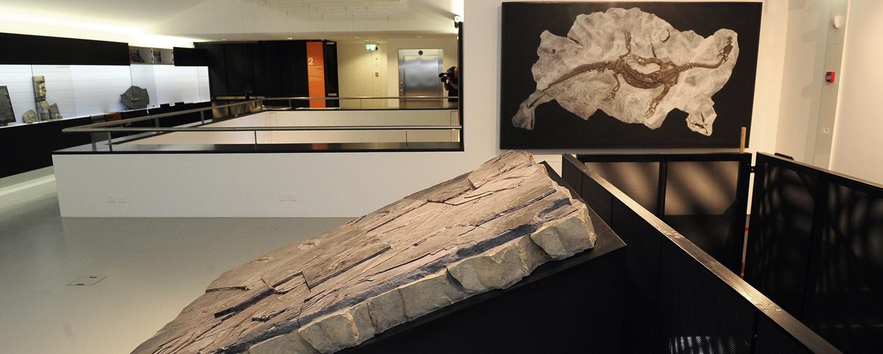 Museo dei fossili del Monte S. Giorgio