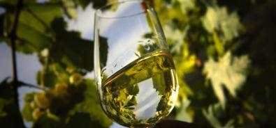 un bicchiere di vino bianco in un vigneto.