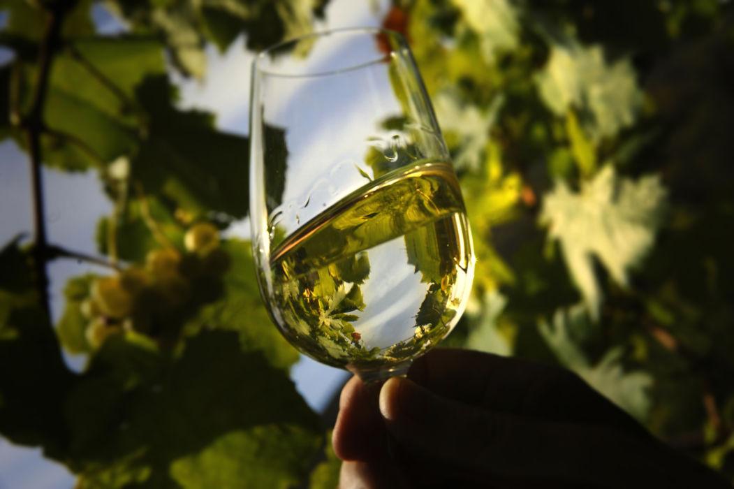 Wine - TicinoTopTen